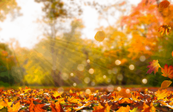 Welcome to September 2021! The Equinox arrives on September 22. Yeah, the beginning of Fall.