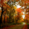 Happy Happy to the Beautiful Fall Foliage!